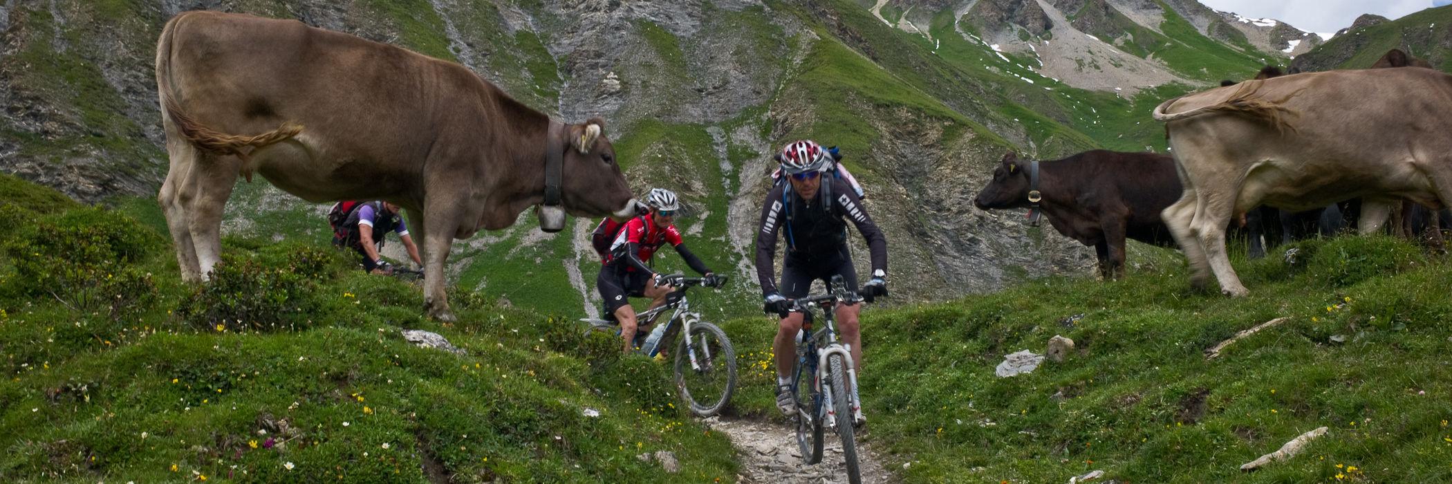 Mit dem Mountainbike über den Trail